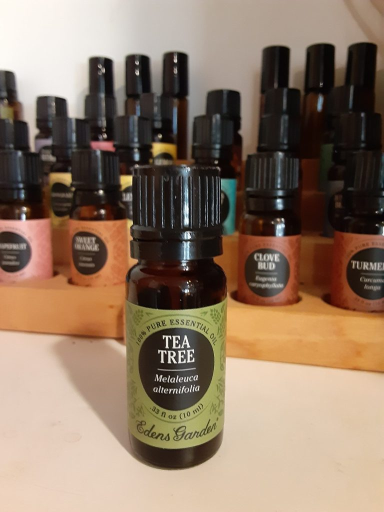 tea tree, bottle of tea tree oil, other essential oils in background