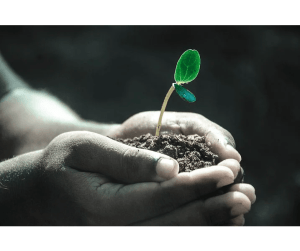 expand your garden, hands holding plant sprout