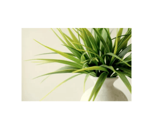 plants, white jar filled with greenery