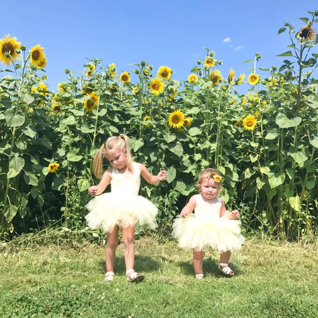 Sisters in their yellow plum nyc tutus in a sunflower field.