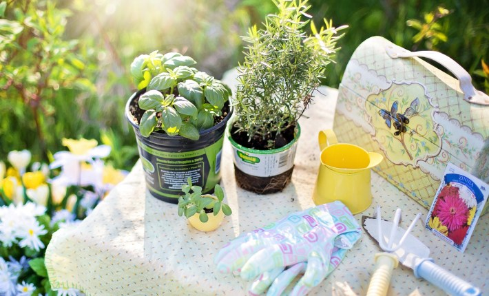 Top Tips To Save Money And Still Have A Great Garden