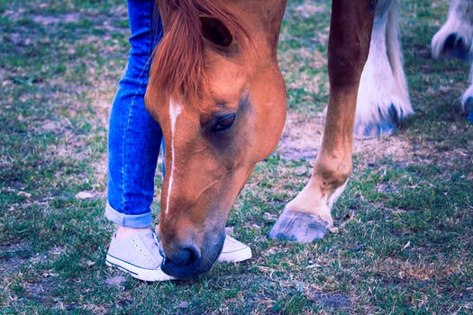 Tips For First-Time Horse Owners