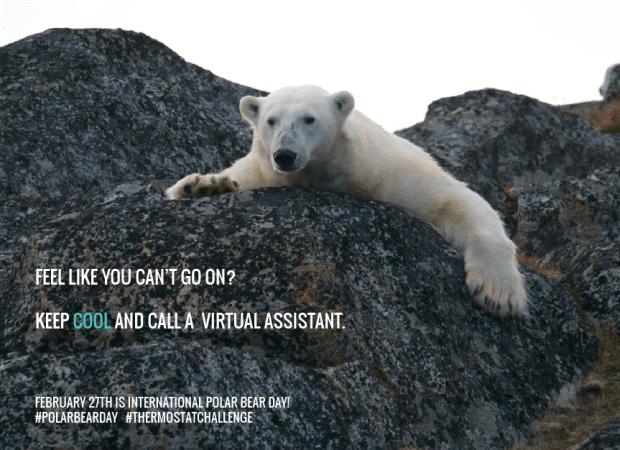 International-Polar-Bear-Day-Feb-27