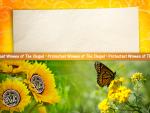 PWOC Sunflowers