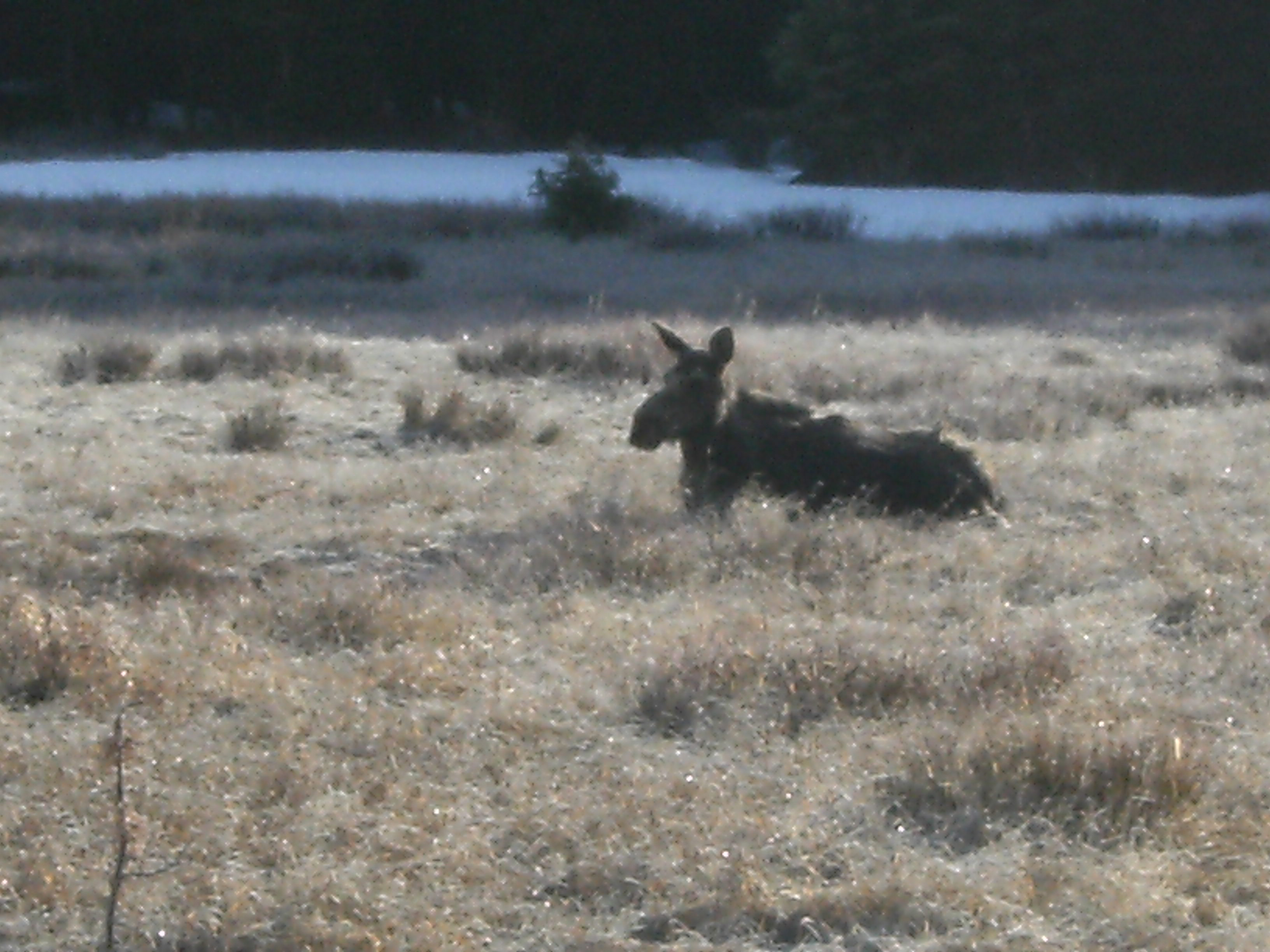 This one just sat and watched me.  She had frost on her fur.