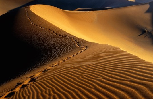 footprints_in_the_sand-800x600