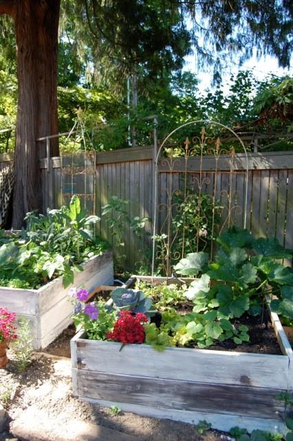 The backyard garden at Volunteer Park Cafe