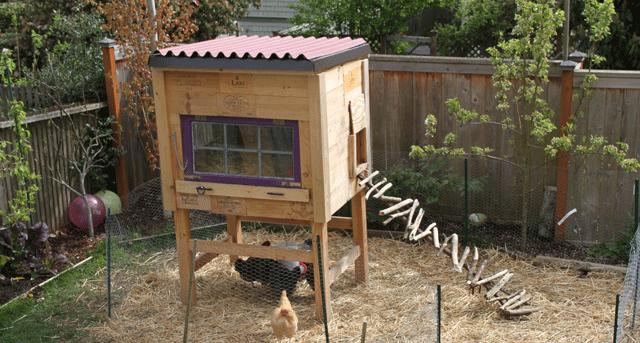 Raising Backyard Chickens for Dummies