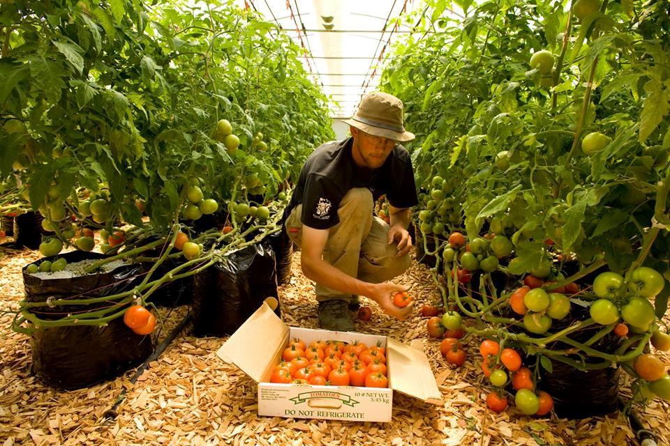 The Evolution of the Puget Sound Food Hub