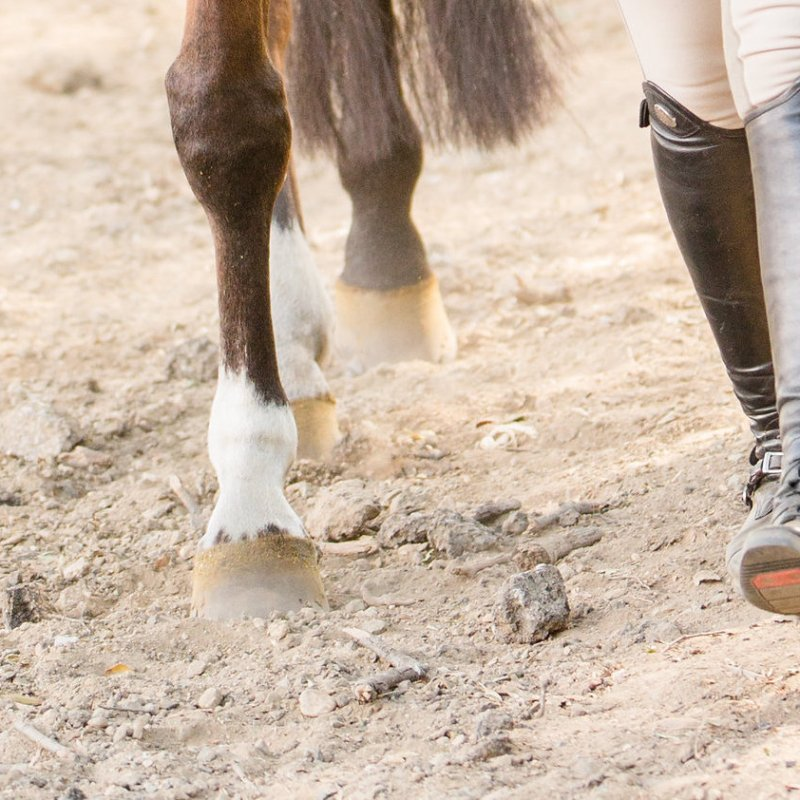 OnTyte Stirrup System Review