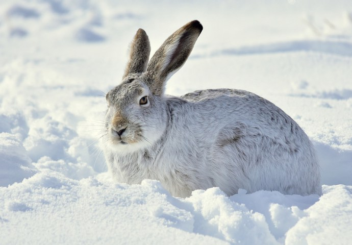 Where Do Rabbits Go In The Winter? (The Truth will Surprise