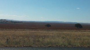 crops as far as the eye can see