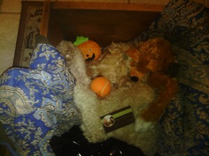 Chewie in his coffin with his memorial items