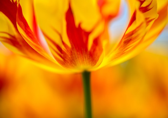 Flower Photography Post Processing – Part 2