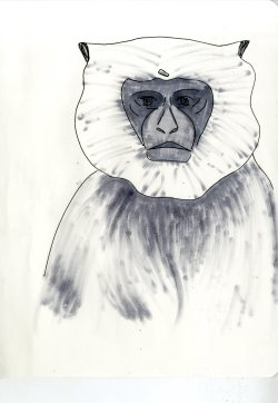 zoo sketches007