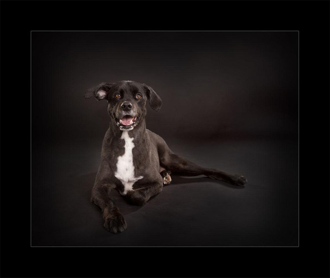 Glasgow pet photographers Happy dog