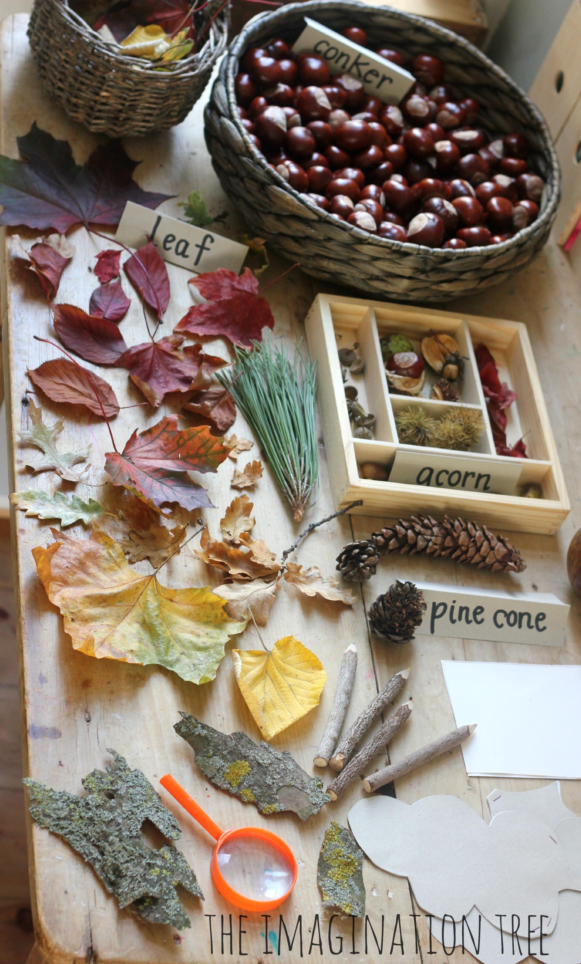 Autumn Nature Exploration Table