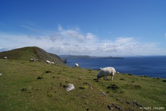 1) Dursey Island