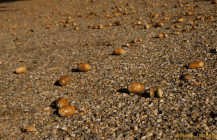 7) Acorns on the ground