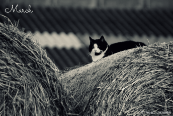 cat on haystack