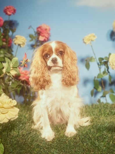 Gucci-year-of-the-dog-collection-the-impression-07