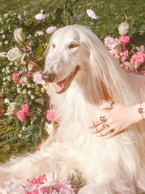 Gucci-year-of-the-dog-collection-the-impression-20