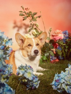 Gucci-year-of-the-dog-collection-the-impression-23