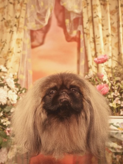 Gucci-year-of-the-dog-collection-the-impression-28