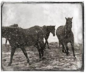 horses04,crop2_distress