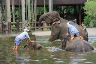 Elephant soup, Elephant Safari Park, Bali, Indonesia