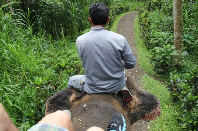 Elephant Ride, Elephant Safari Park, Bali, Indonesia