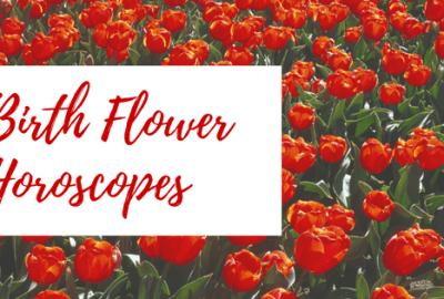 Birth flower horoscope - tulips