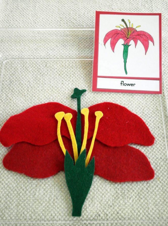 Parts of a Flower II ⋆ The Indigo Teacher