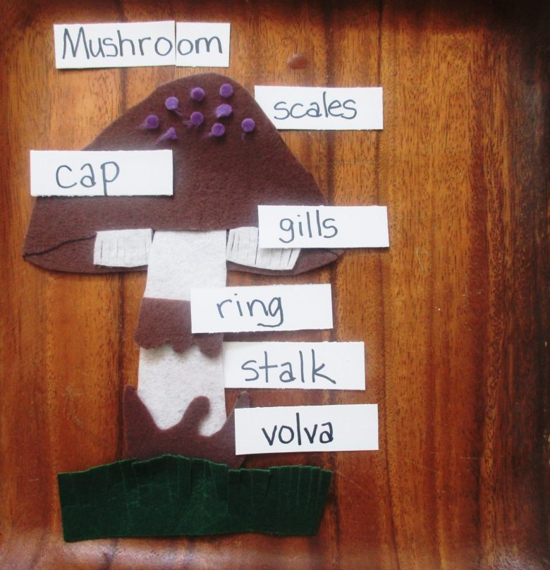 Parts of a Mushroom II – Felt Mushroom Puzzle