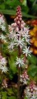 theinfillclicks and theinfill - garden photography - April garden