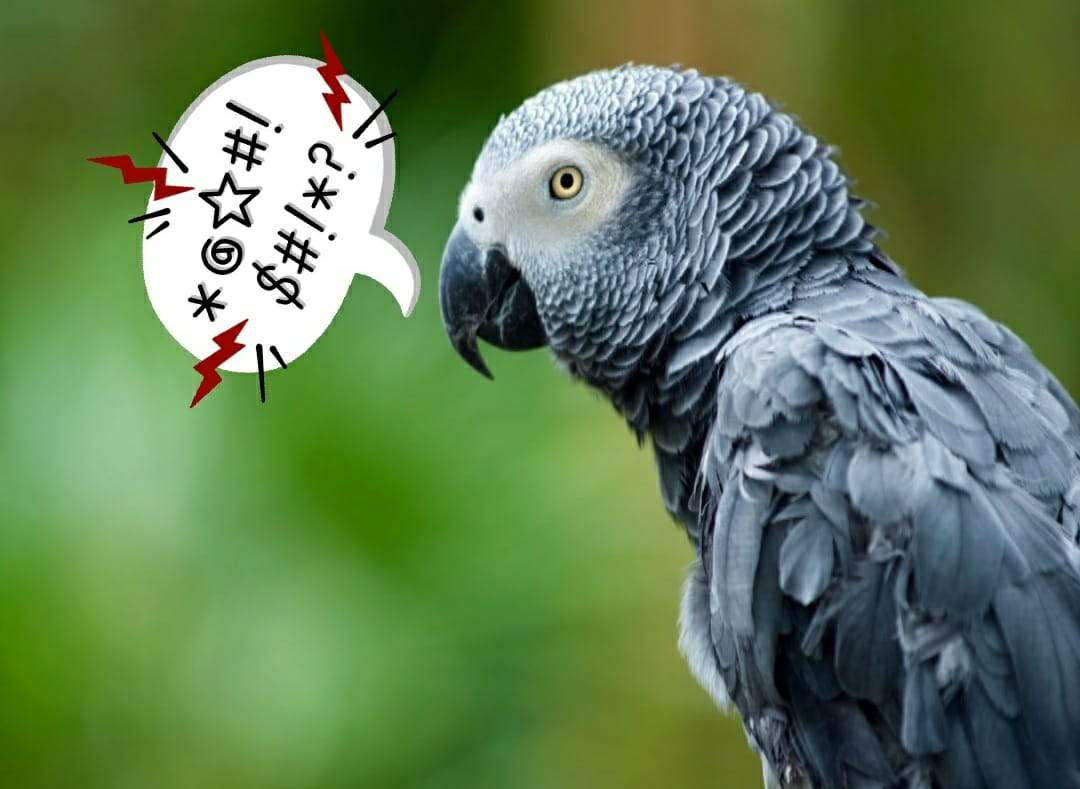 THESE PARROTS ABUSE EACH OTHER AND LAUGH ABOUT IT