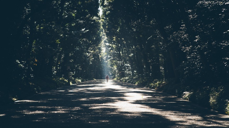 """A silhouette of a person on a sunlit tree-lined road"" by freddie marriage on Unsplash"