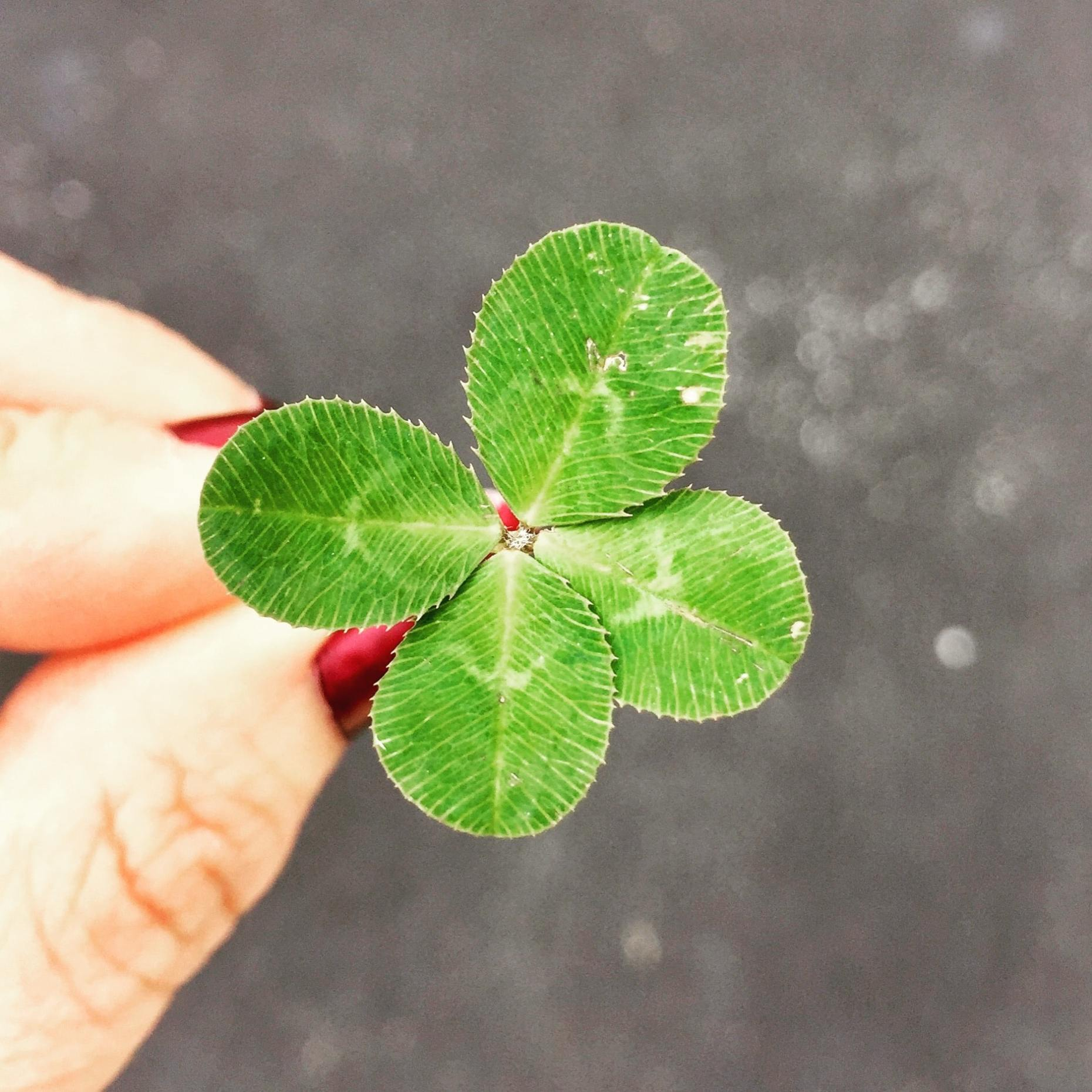 believe in miracles 4 leaf clover amy reed