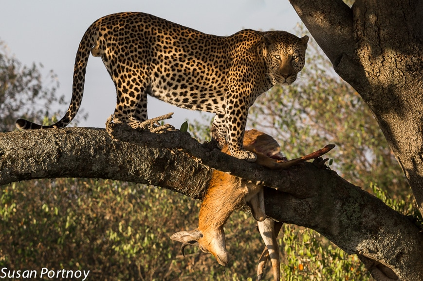 Six Photography Tips I Learned From A Wildlife Photographer You Can Use Anytime, Anywhere