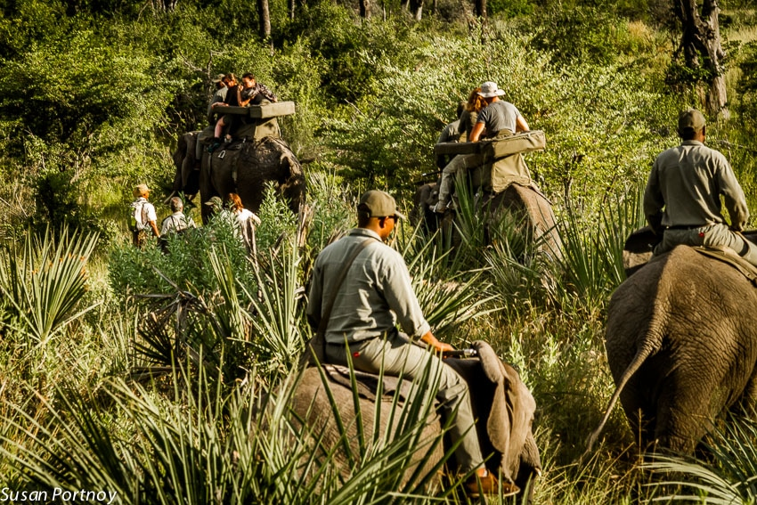 An elephant-back view of the bush and the other elephants. I rode Kitty who was on the slow side in comparison to the others