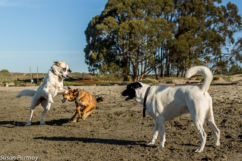 Exploring a New City? Hear are 4 Reasons to Go to a Dog Park