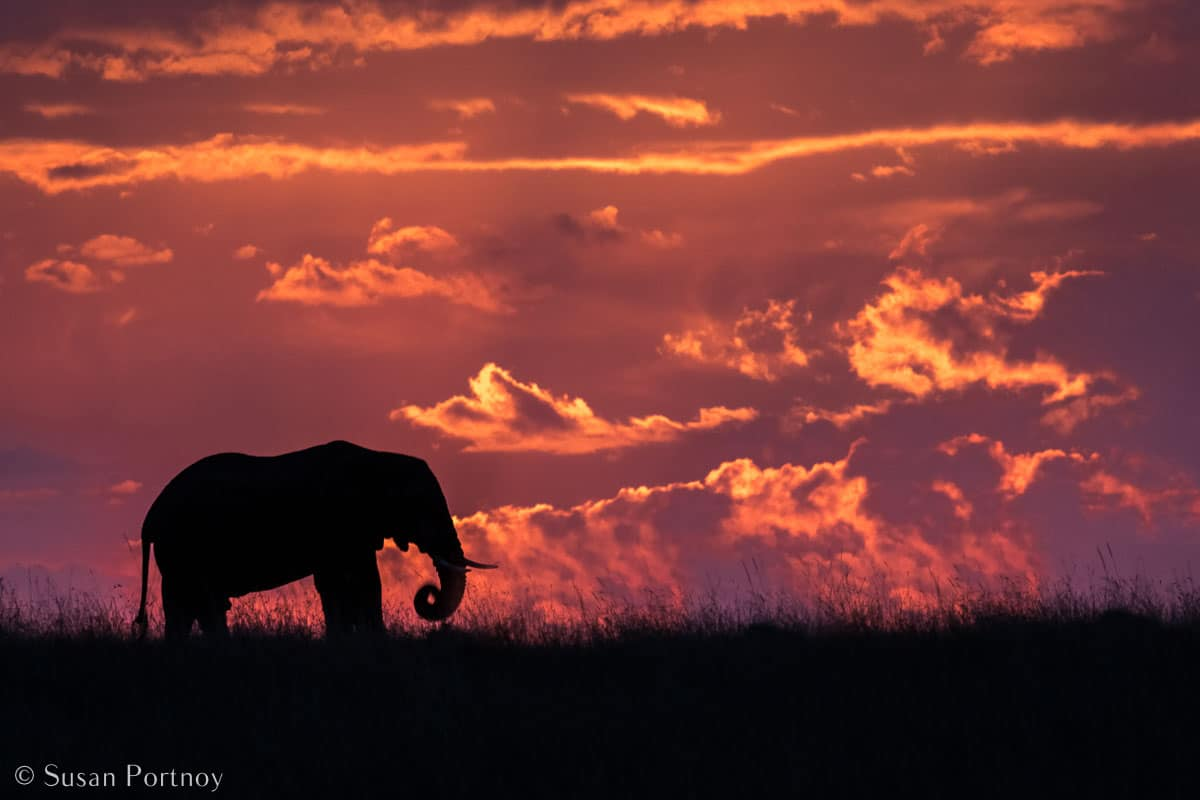 Stunning Silhouette Photos Guaranteed to Inspire Your Travels-Elephant in silhouette against pink sunset sky