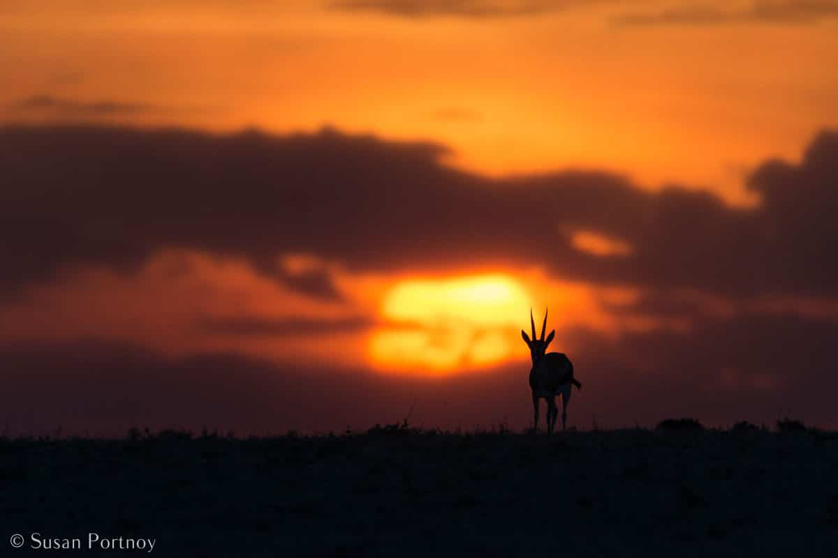Stunning Silhouette Photos Guaranteed to Inspire Your Travels-A springbok in silhouette on a ridge in the Masai Mara at sunset.