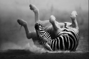 Photo: Johan Swanepool