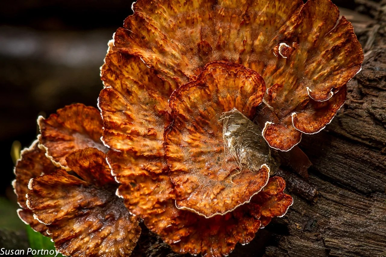 Funghi in Costa Rica