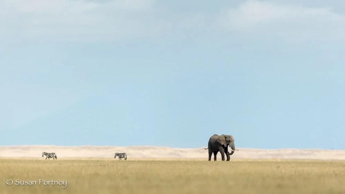 Elephant on Lake Amboseli, Kenya