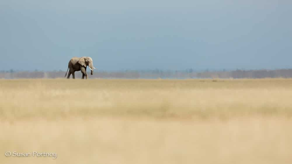 Elephant stands on Lake Amboseli