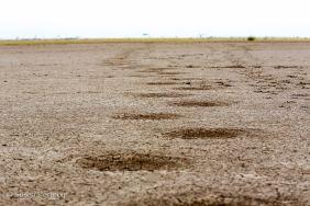 Elephant tracks burned into the ground on Lake Amboseli