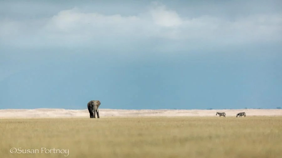 An elephant many hundreds of yards away on Amboseli Lake in Kenya