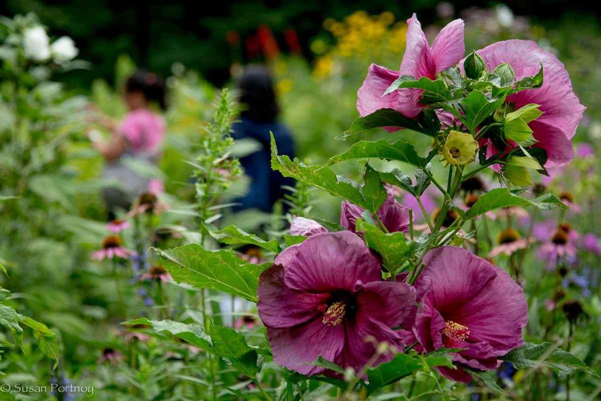 Flowers bloom garden in Central Park
